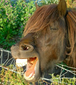 pony teeth yawn