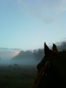 Beaker Morning Mist Nov 12
