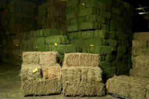 hay exchange plant city fl