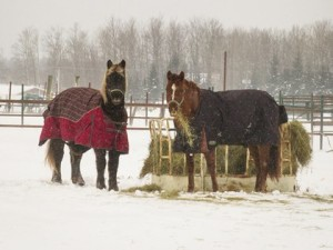 horse-hay-winter-snow