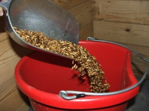 feed grain bucket
