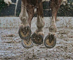canter hoof shoe mud